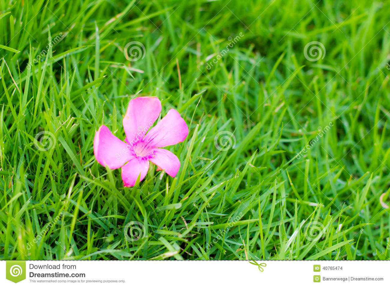 Pink Flower On Green Grass Stock Photo Image Of Grass