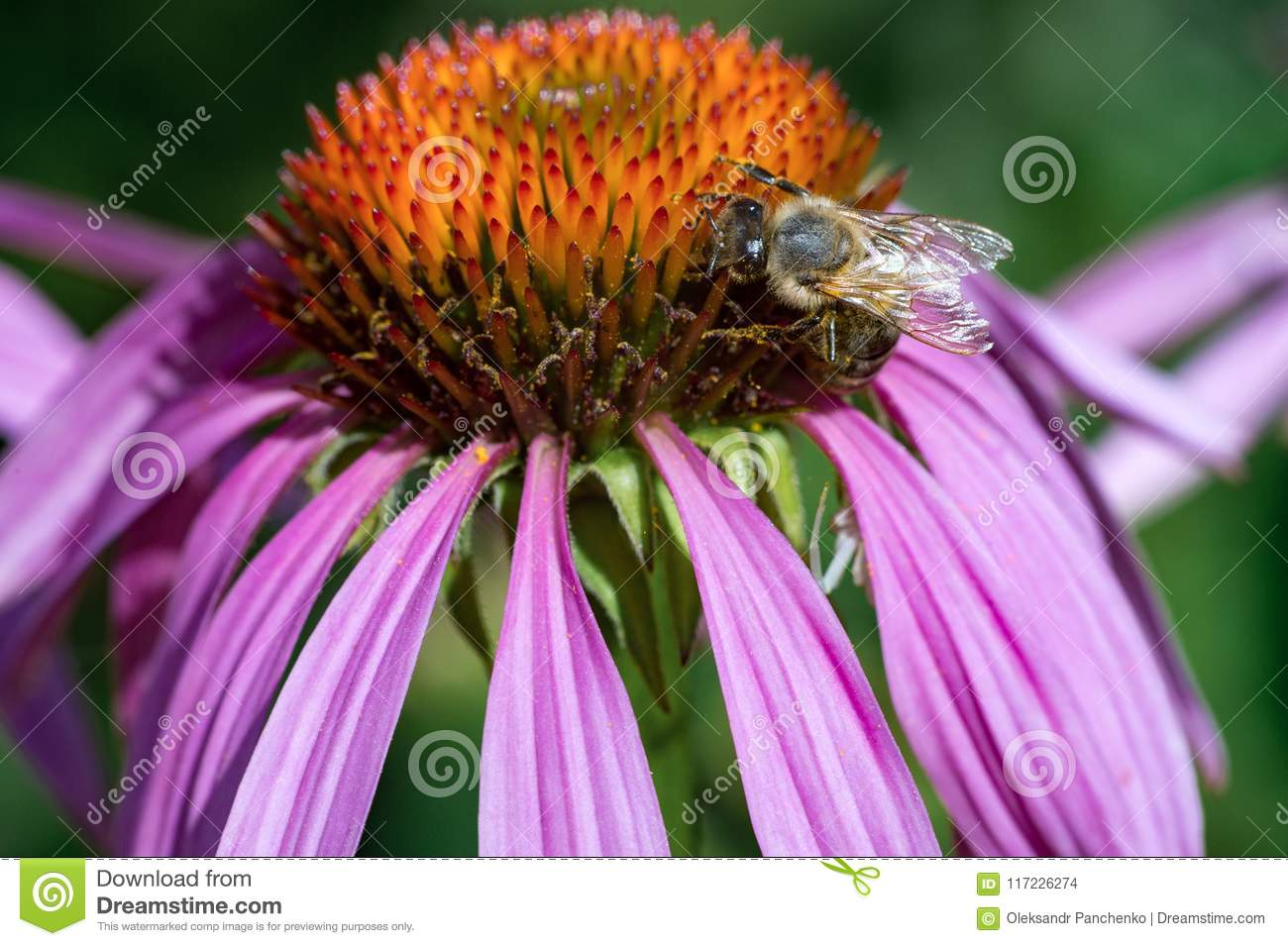Pink flower with honey bee
