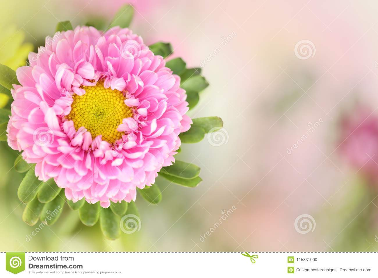 A pink flower in a horizontal presentation.