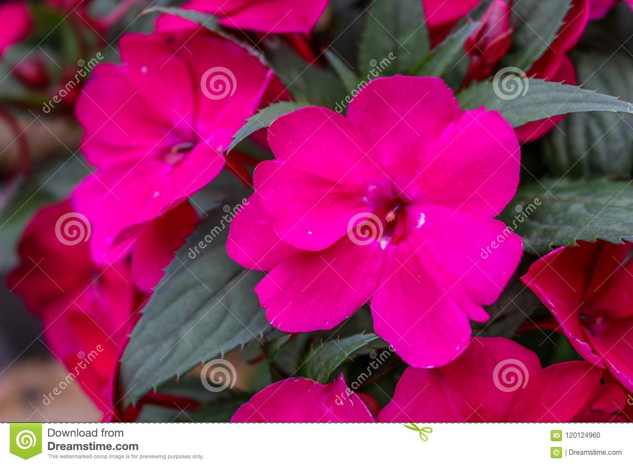 Pink flower with leaves