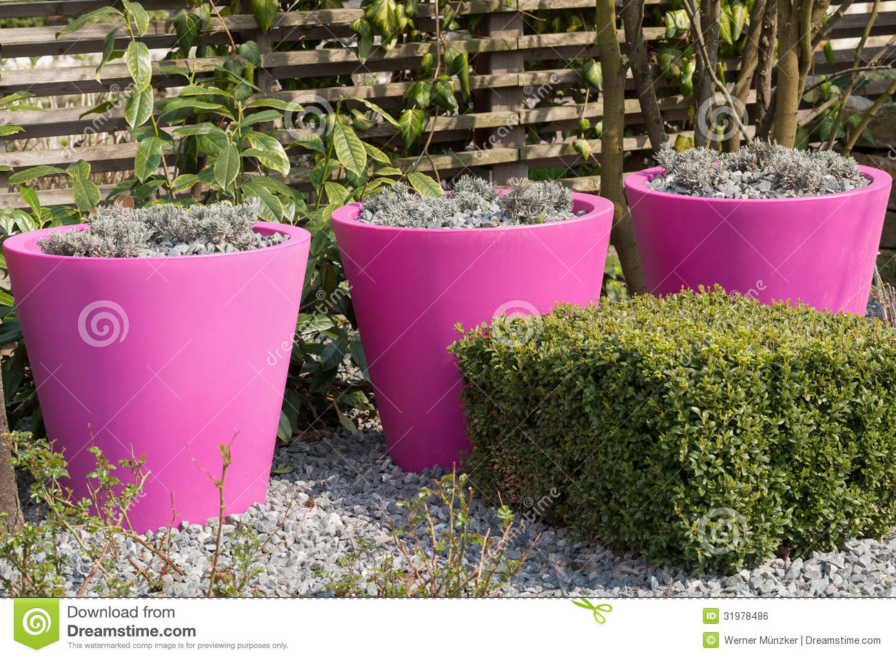 Pink flower pots stock photo image of park ornamental 31978486 pink flower pots mightylinksfo