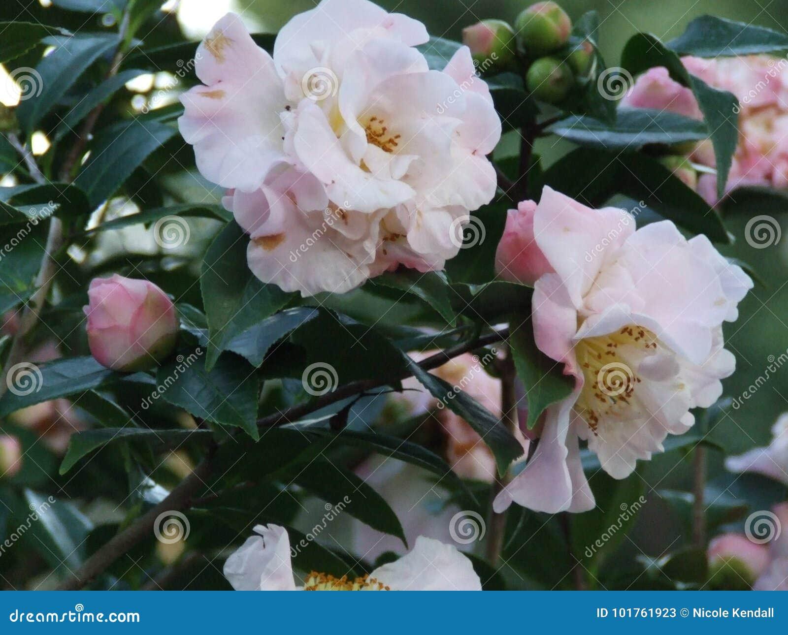 Pink Flower Stock Image Image Of Trees Northcarolina 101761923
