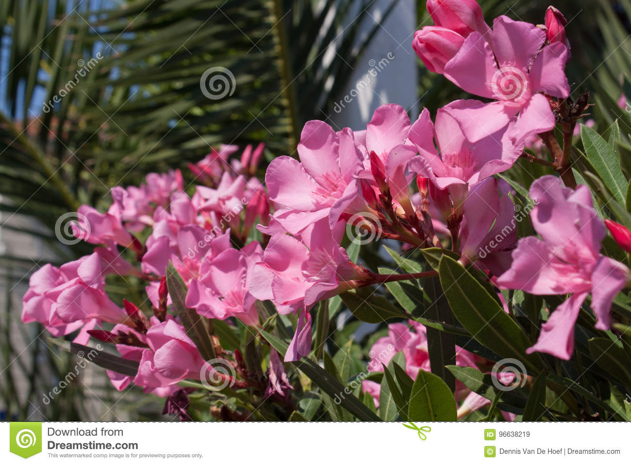 Pink flower in the sun.