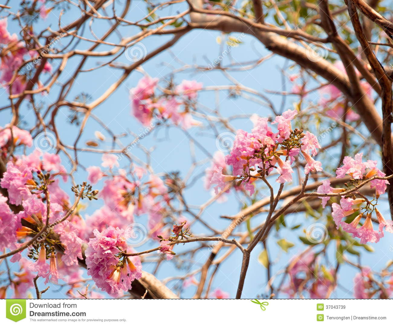 Pink Flower Royalty Free Stock Images Image 37043739