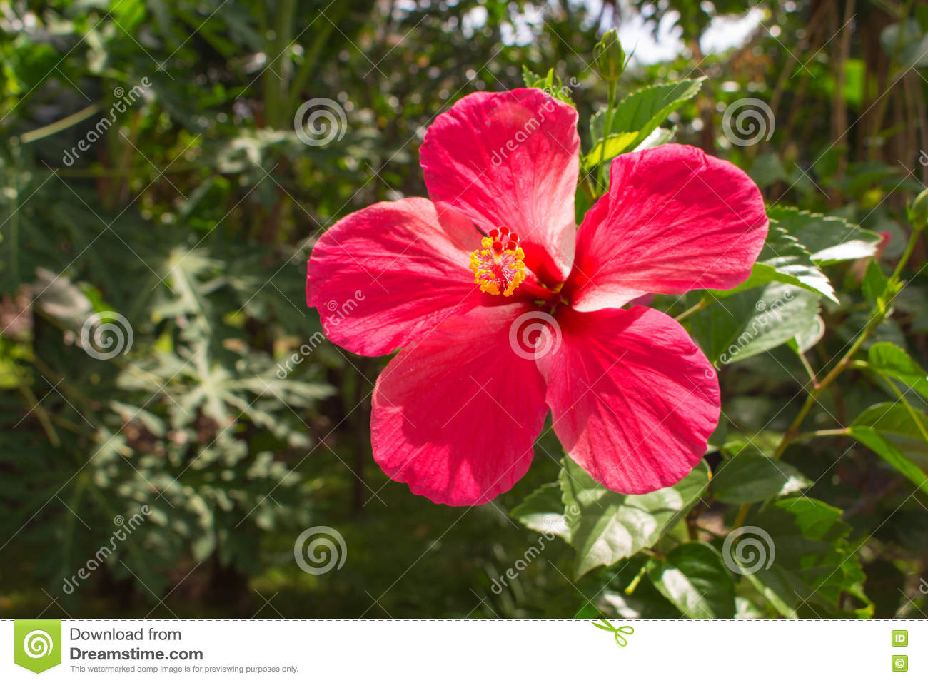 Pink Flower On Tropical Background Bright Hibiscus Flower On The