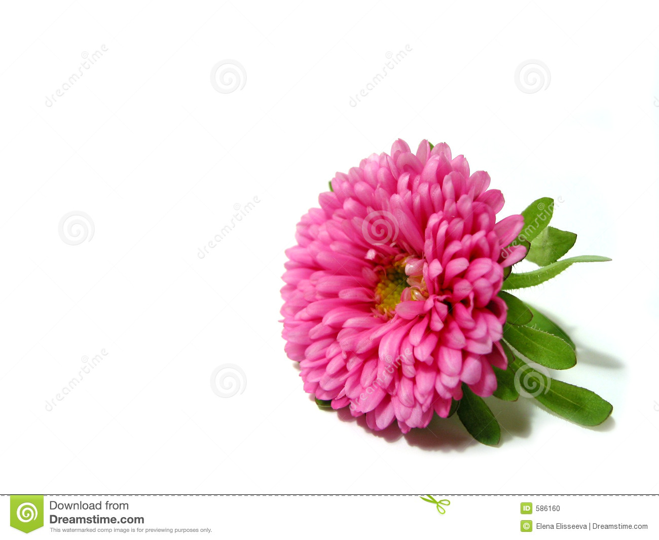 Fresh yellow flowers on white background stock photo image of pink flower on white background stock photo mightylinksfo