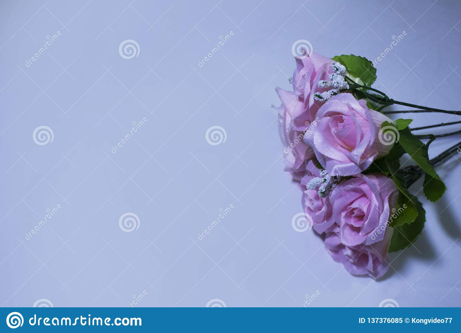 Pink Flower On White Background Photoshoot Valentine Day Stock Image Image Of Greeting Green 137376085