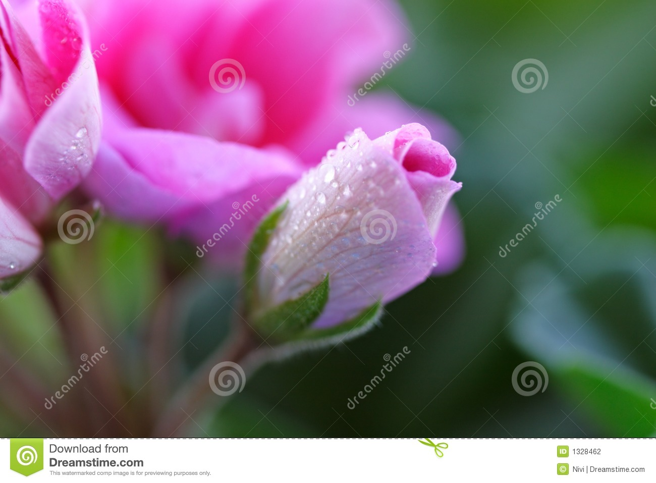 Pink flowers stock photo image of light macro bright 1328462 pink flowers mightylinksfo