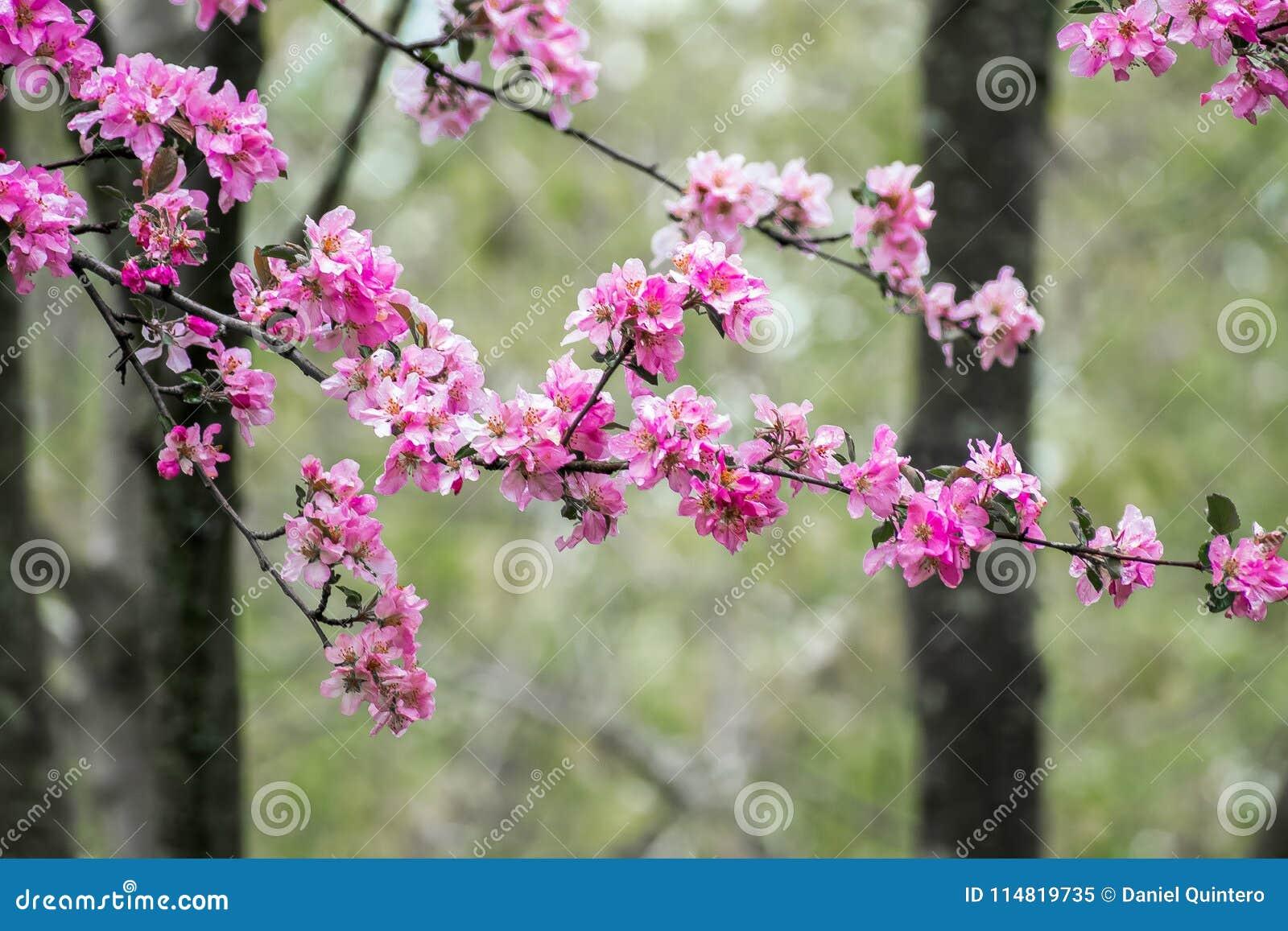 Pink blossom flowers and trees stock image image of coast cargo royalty free stock photo mightylinksfo