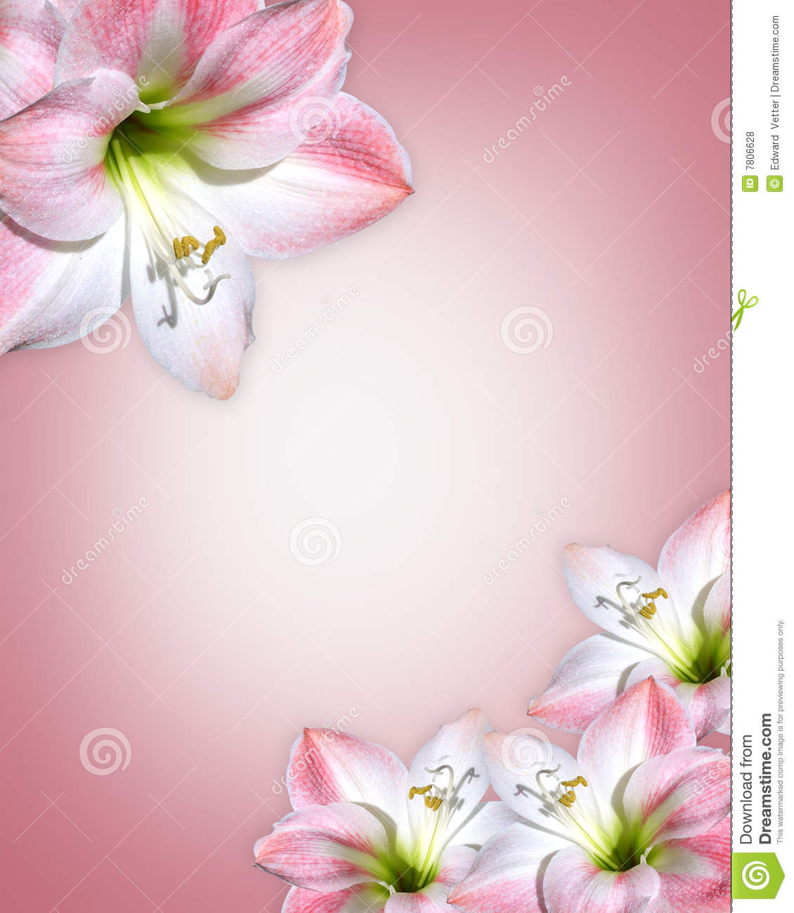 Pink flowers border amaryllis stock illustration illustration of pink flowers border amaryllis mightylinksfo Choice Image