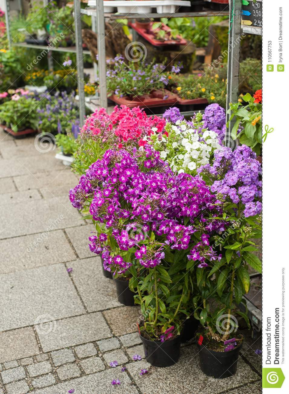 Pink Flowers And Daisies In Flower Shop Stock Image Image Of