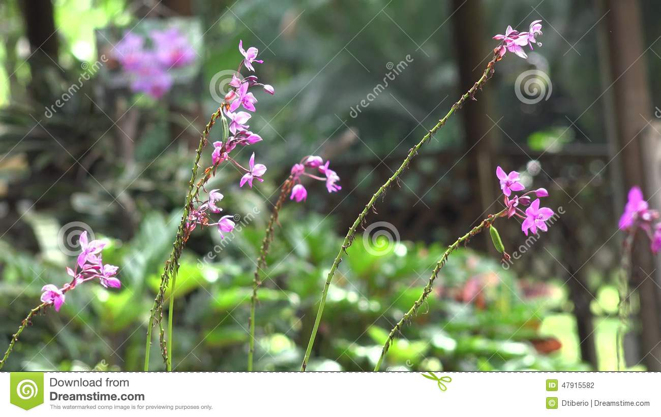 Pink Flowers Flowering Plants Nature Stock Footage Video Of Lily