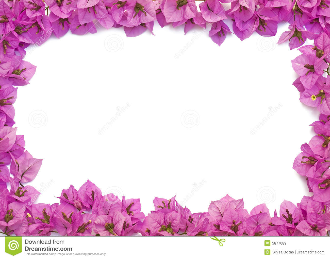 Pink Flowers Frame Royalty Free Stock Images Image 5877089