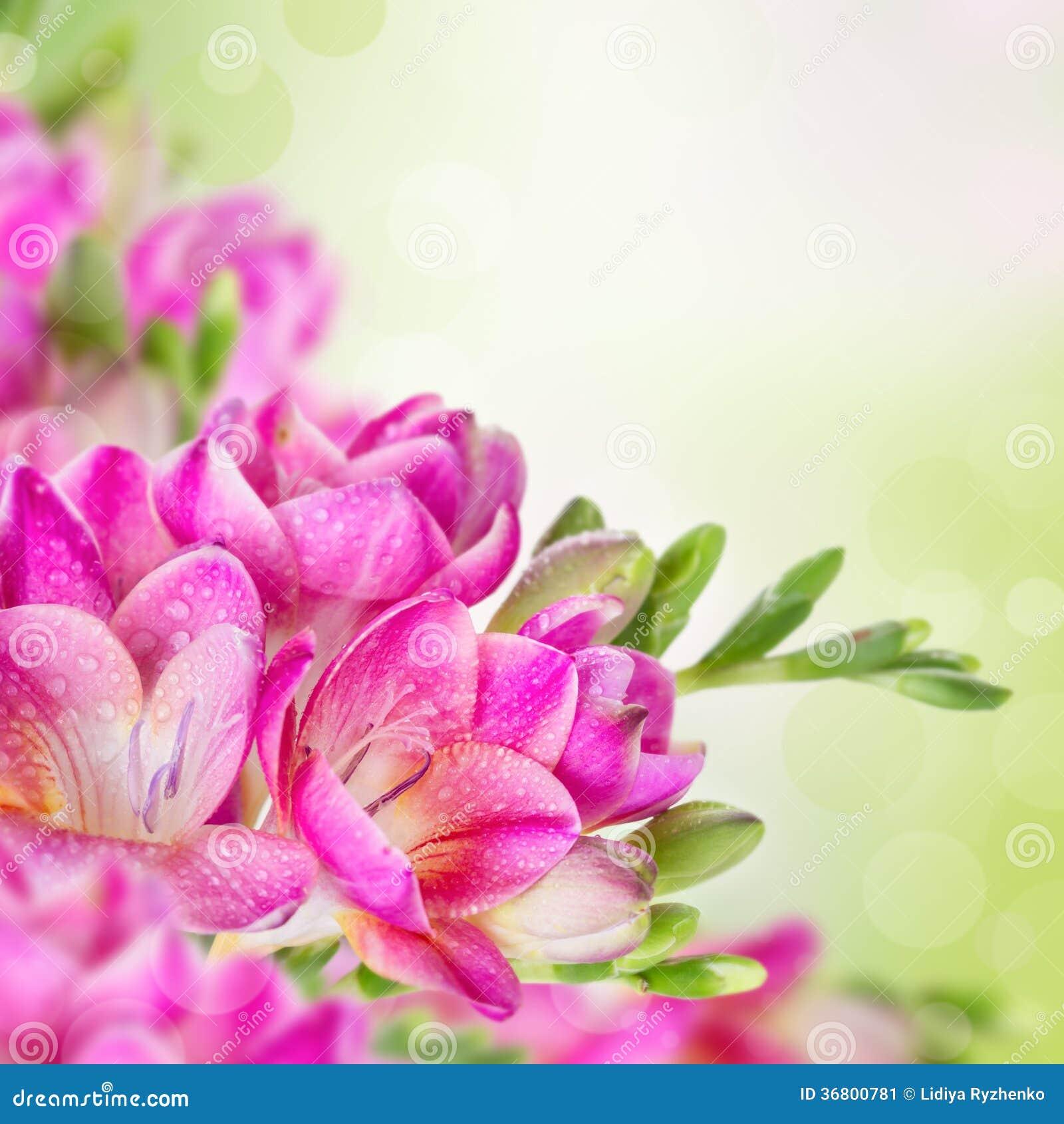 Розовые цветы на зеленом фоне фото