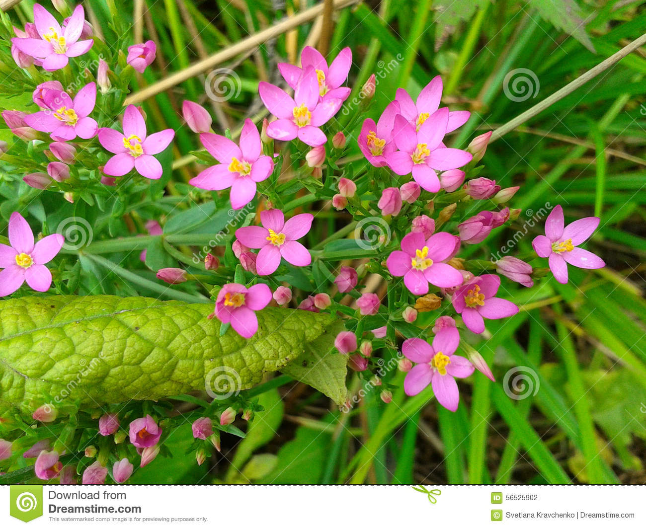 Pink flowers in green grass stock photo image of summer flora pink flowers in green grass mightylinksfo Gallery