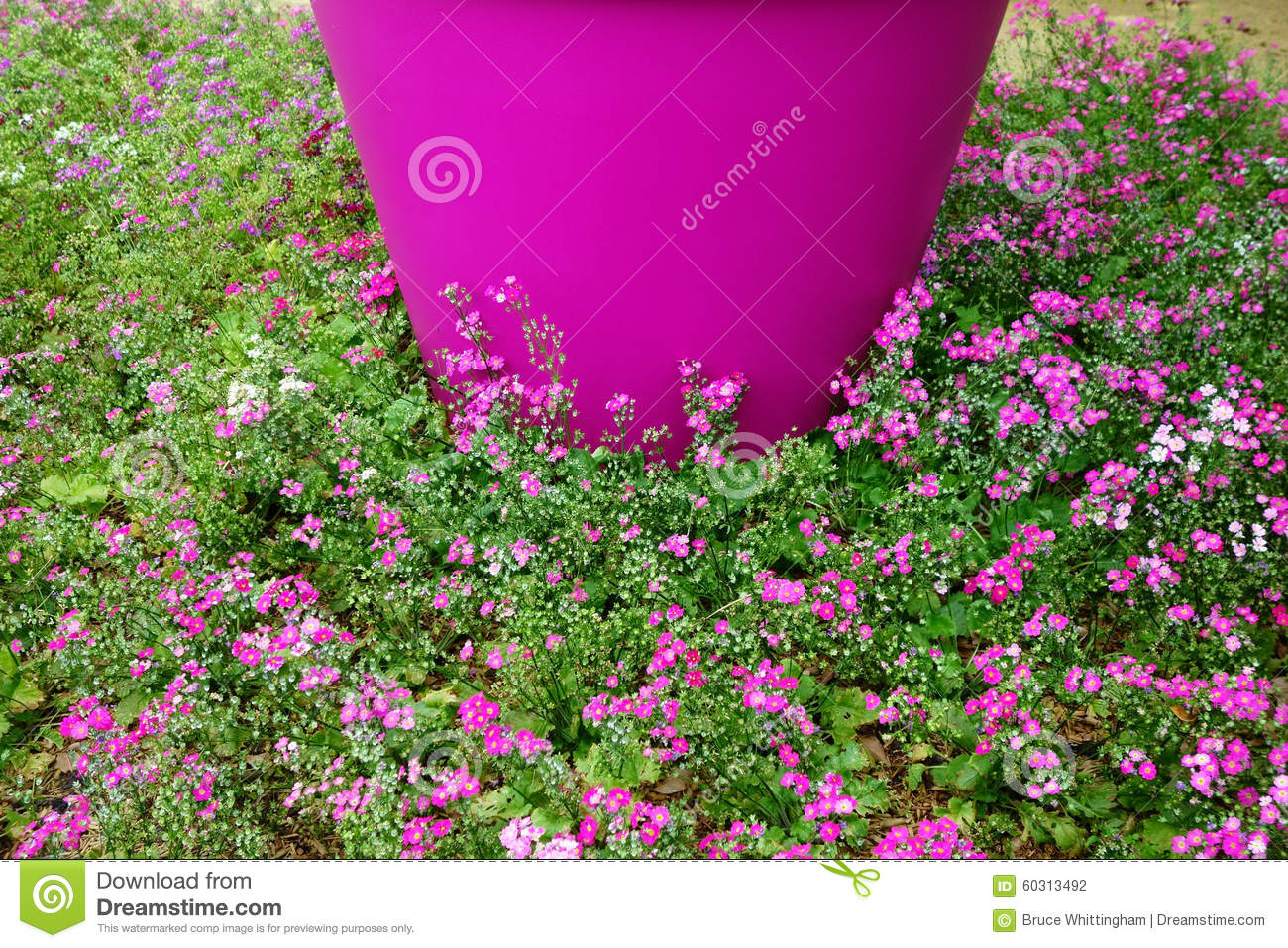 Pink flowers in ground cover stock photo image of flower download comp mightylinksfo