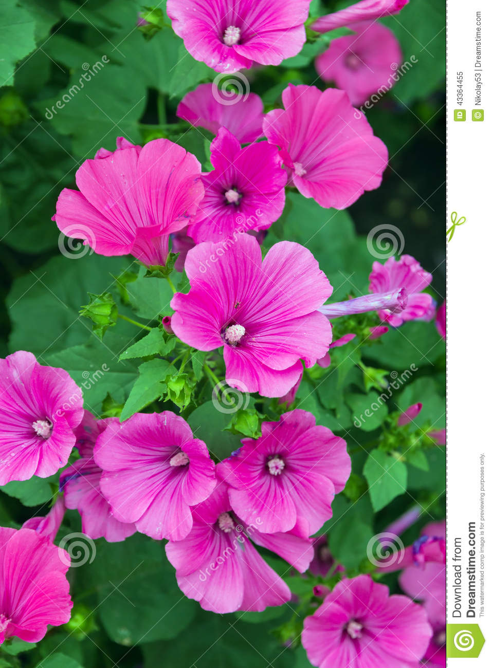 Pink flowers stock image image of photo green backgrounds 43364455 pink flowers mightylinksfo