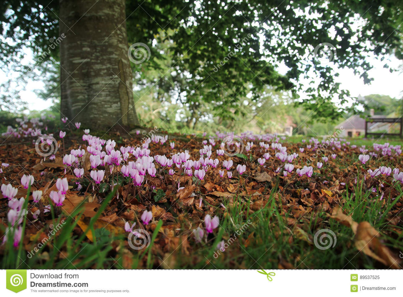 Pink Flowers Stock Image Image Of Flower Green Botany 89537525