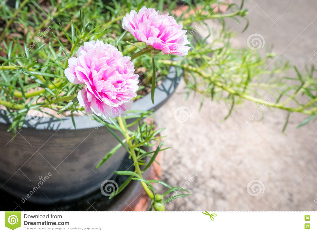 Pink flowers stock photo image of bright blossom common 72941346 download comp mightylinksfo