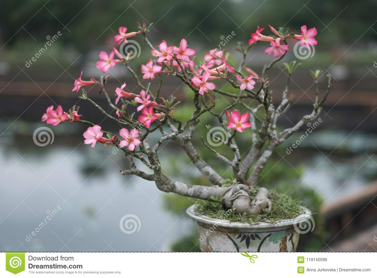 Pink Flowers Of A Tropical Plant Stock Image Image Of Plants