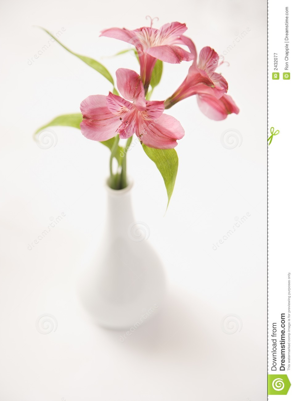 Royalty-Free Stock Photo. Download Pink Flowers In Vase.