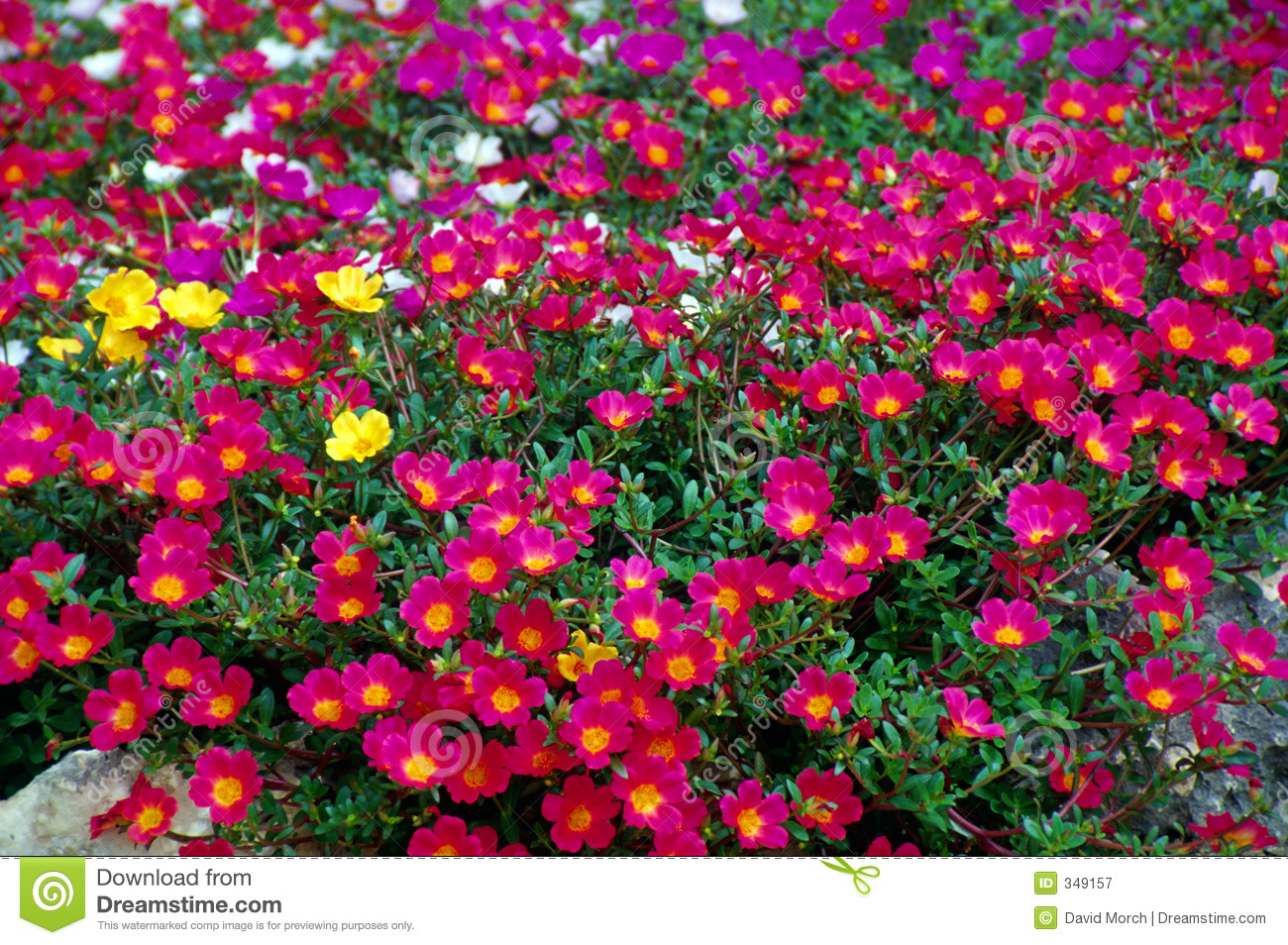 Pink Garden Flowers Stock Image Image Of Flower Blossoms 349157