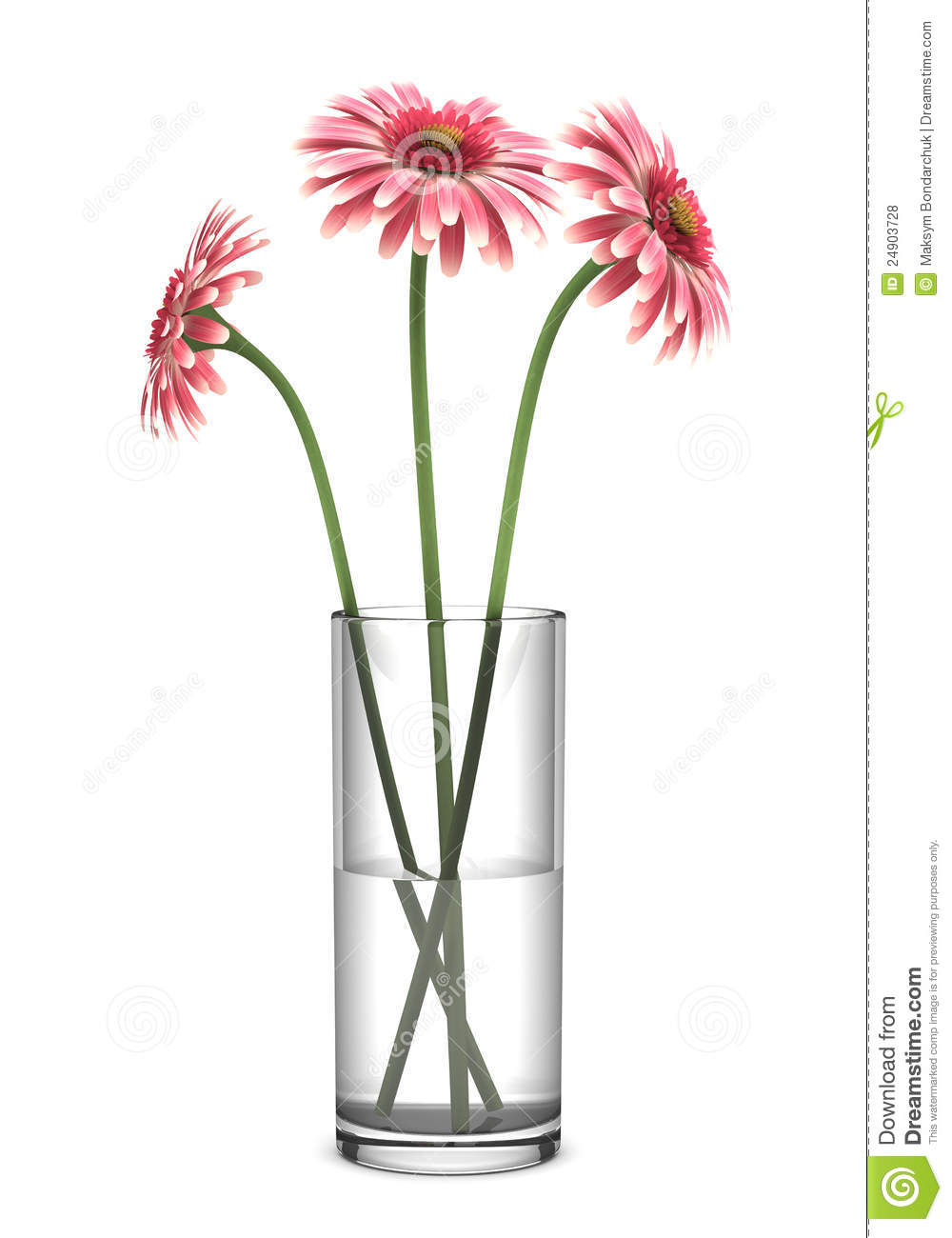 Pink Gerbera Daisies In Vase Isolated On White Royalty ...