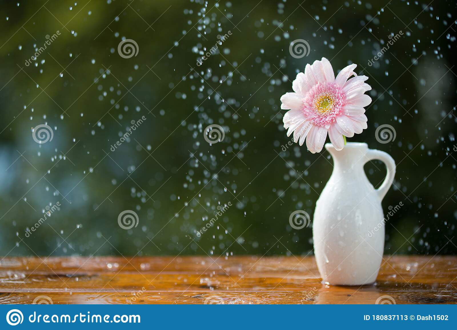 Pink Gerbera Daisy Flower In Vase On Wooden Table Outdoors Under The Rain Stock Image Image Of Flora Bright 180837113