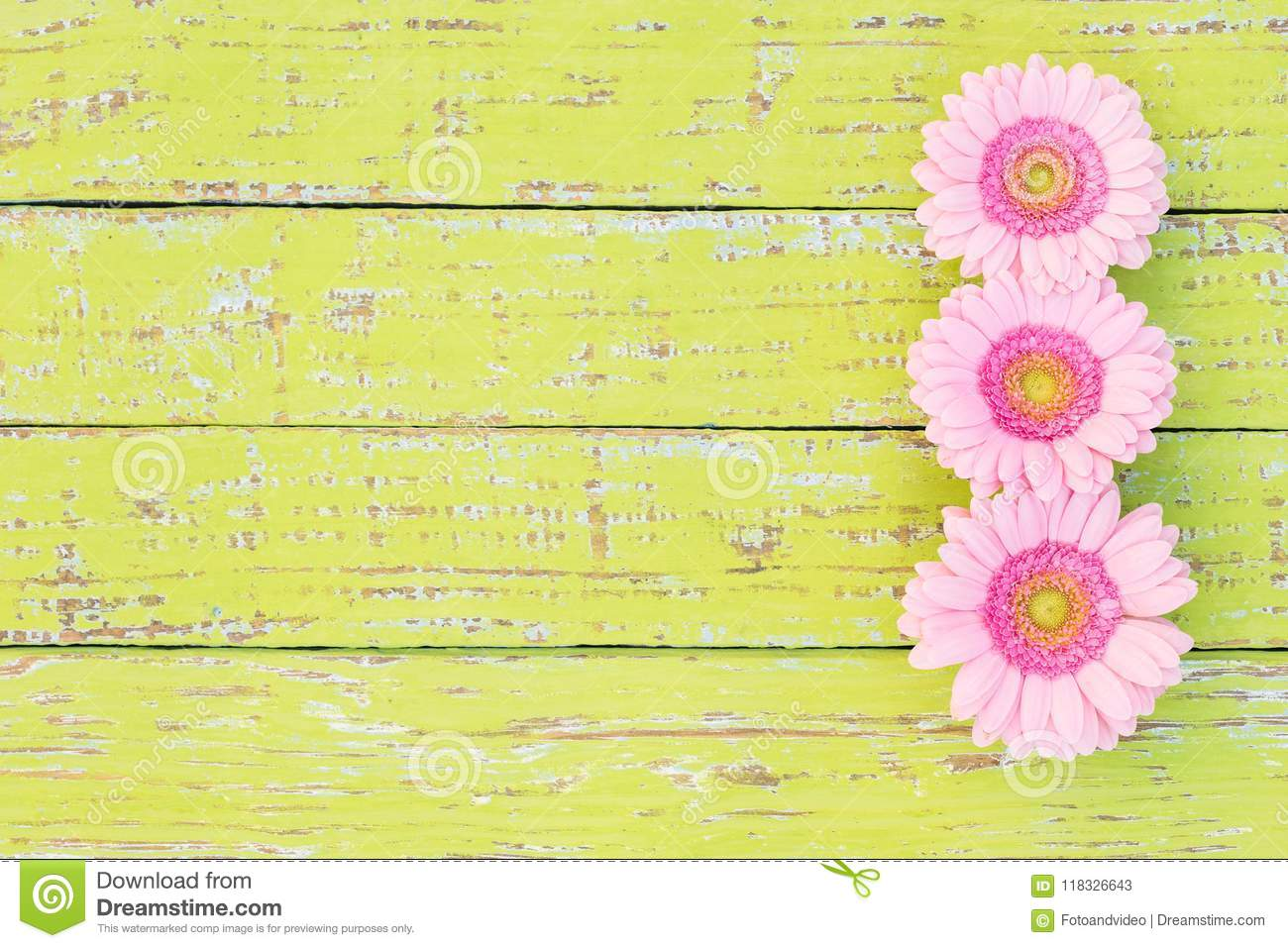 Pink Gerbera Daisy Flower Border On Rustic Wooden Background For