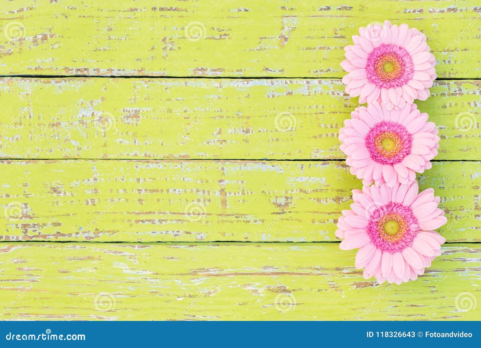 Pink gerbera daisy flower border on rustic wooden background for pink gerbera daisy flower border on rustic wooden background for greeting card izmirmasajfo