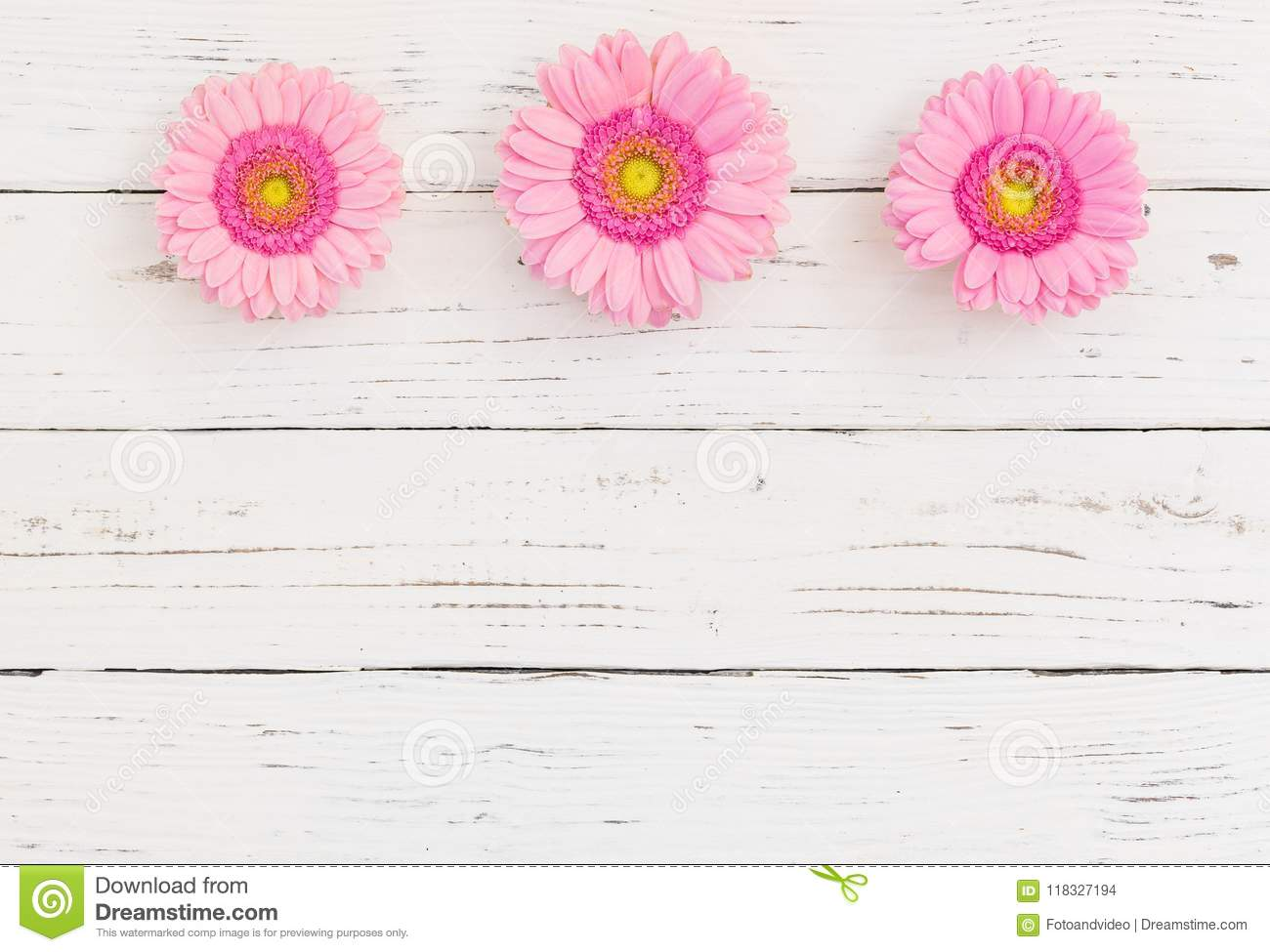 Beautiful pink gerbera daisy flowers border on white wood background download beautiful pink gerbera daisy flowers border on white wood background with copy space top izmirmasajfo