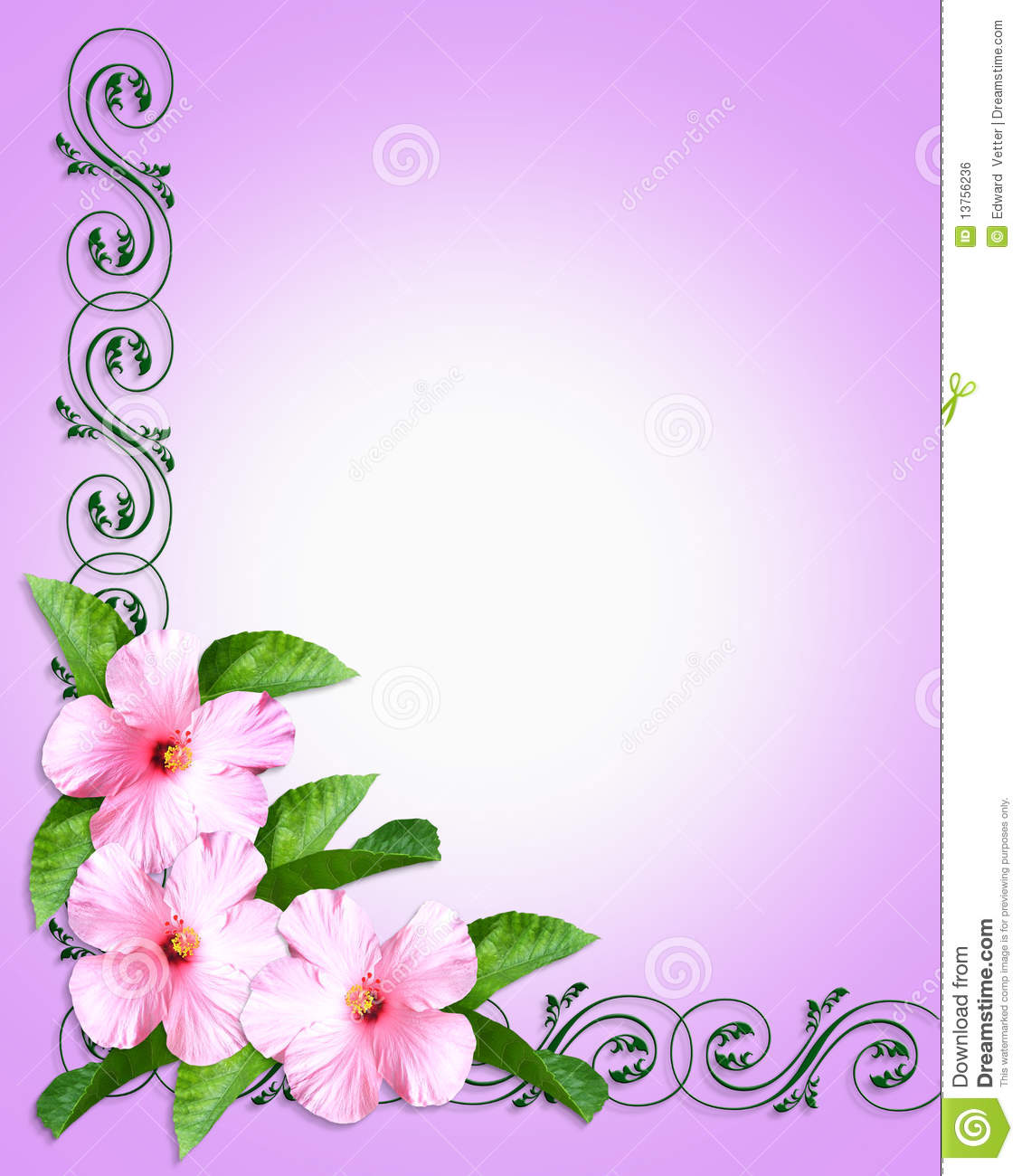 Image and illustration composition of beautiful pink hibiscus ...