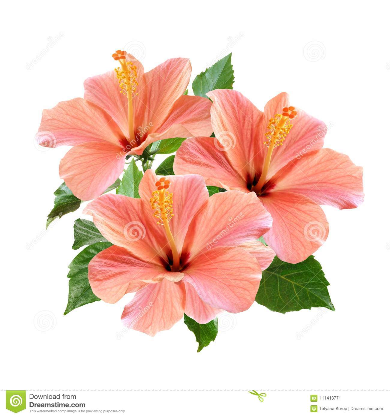 Pink hibiscus flowers bouquet isolated on white background stock royalty free stock photo izmirmasajfo