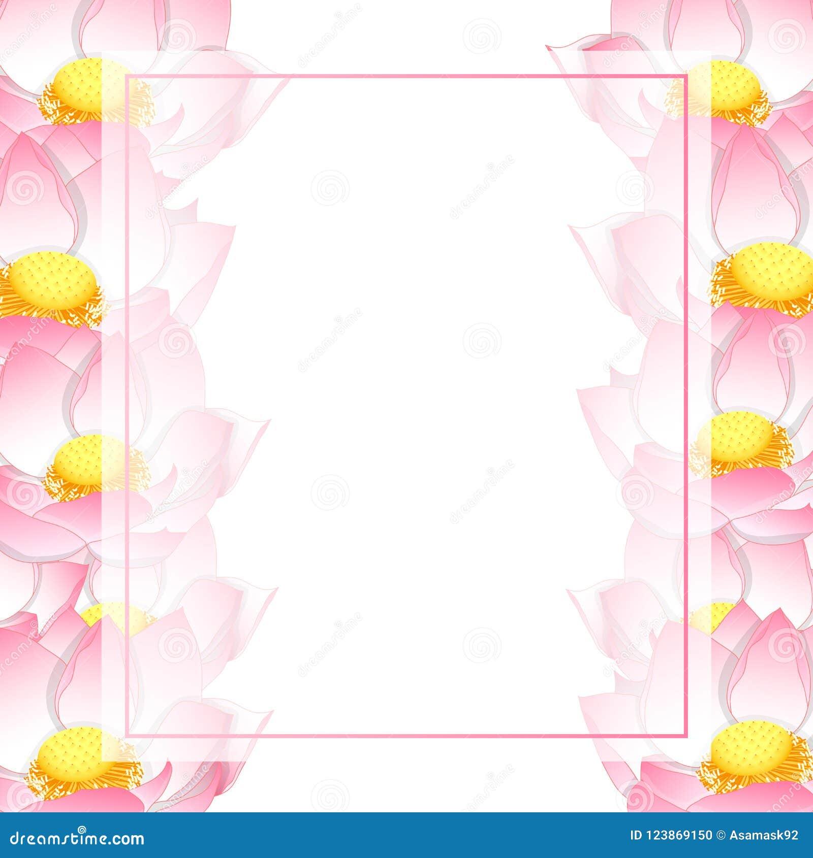 Pink Indian Lotus Banner Card Nelumbo Nuciferasacred Lotus Bean