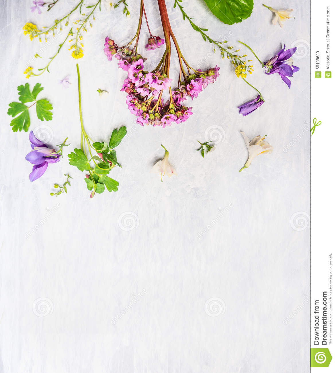 Plants for spring and summer - Pink Lilac And Yellow Spring Or Summer Garden Flowers And Plants On Light Wooden Background