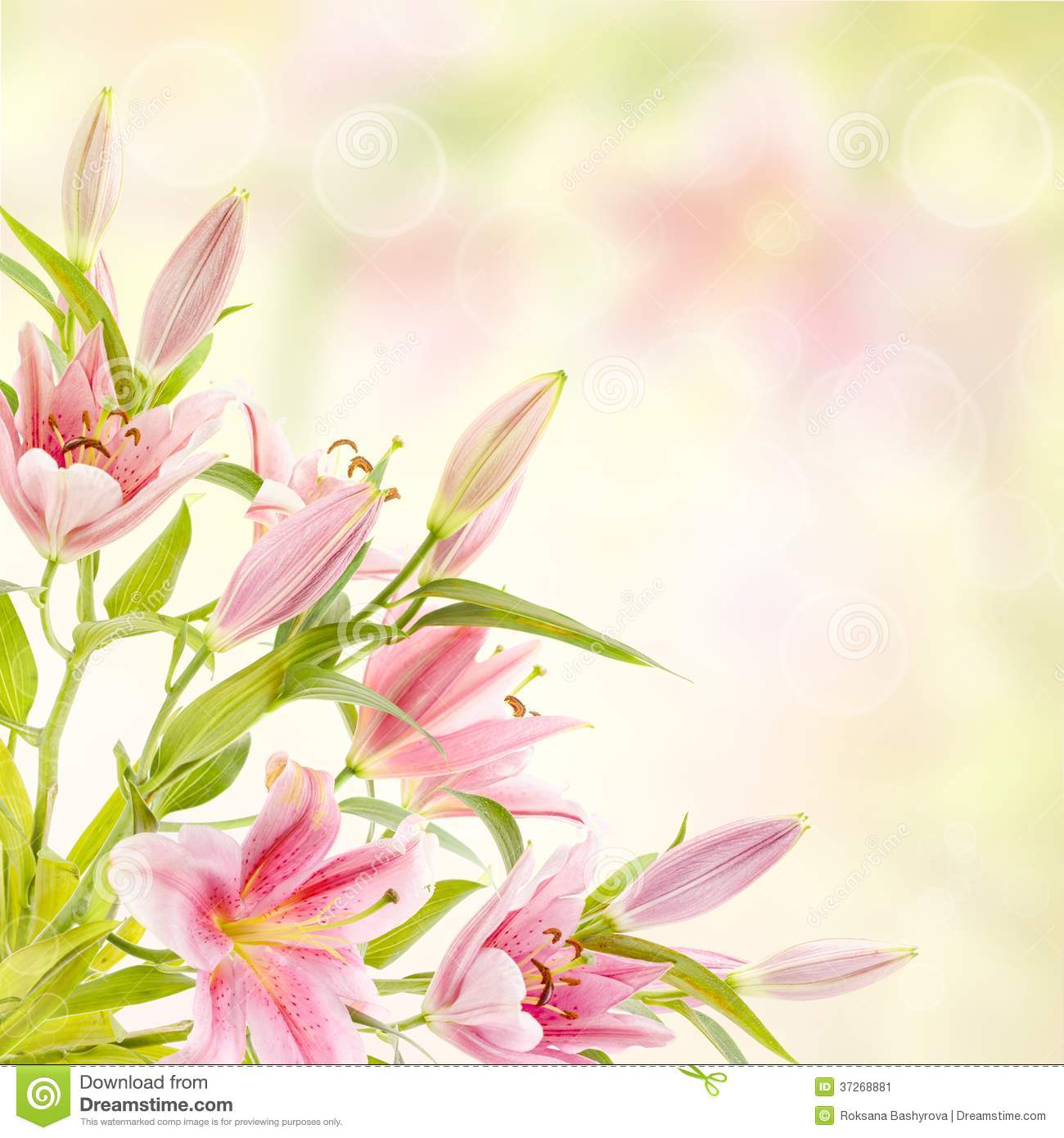 Pink Lilies Background Stock Image