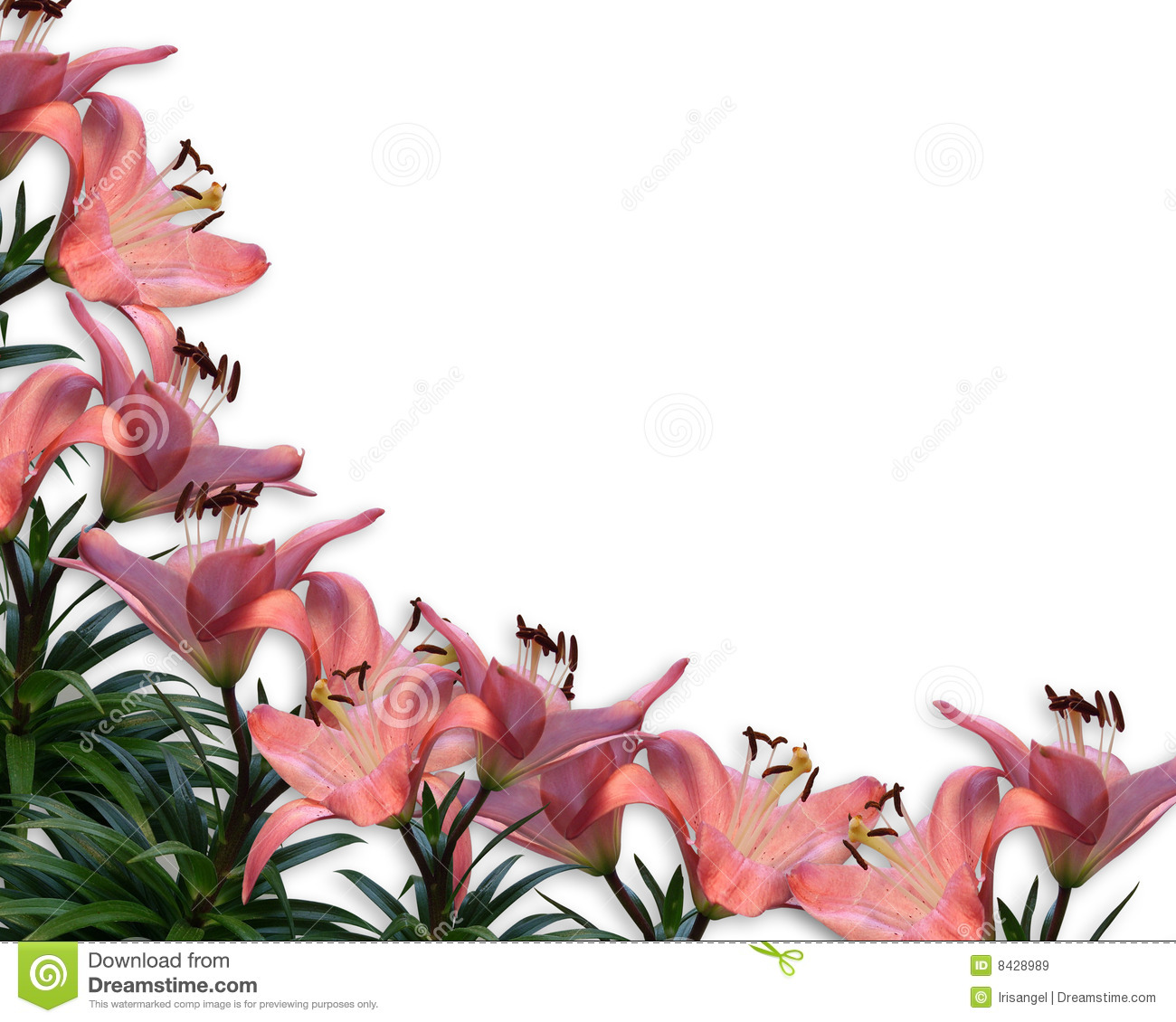 Pink Lilies Floral Border Invitation Stock Illustration