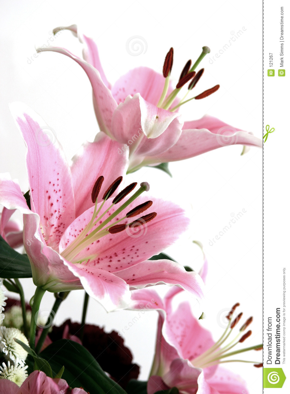 pink lillies royalty free stock photography  image, Beautiful flower