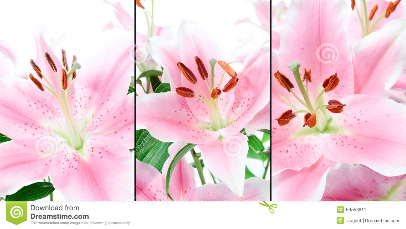 Pink Lillies Montage