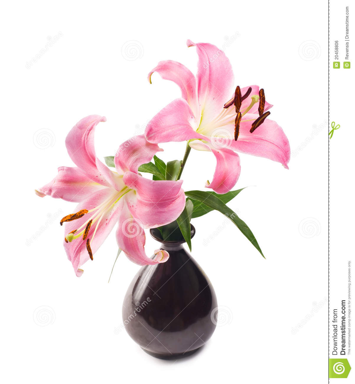 Pink lily in black pottery vase royalty free stock image for Lilium in vaso