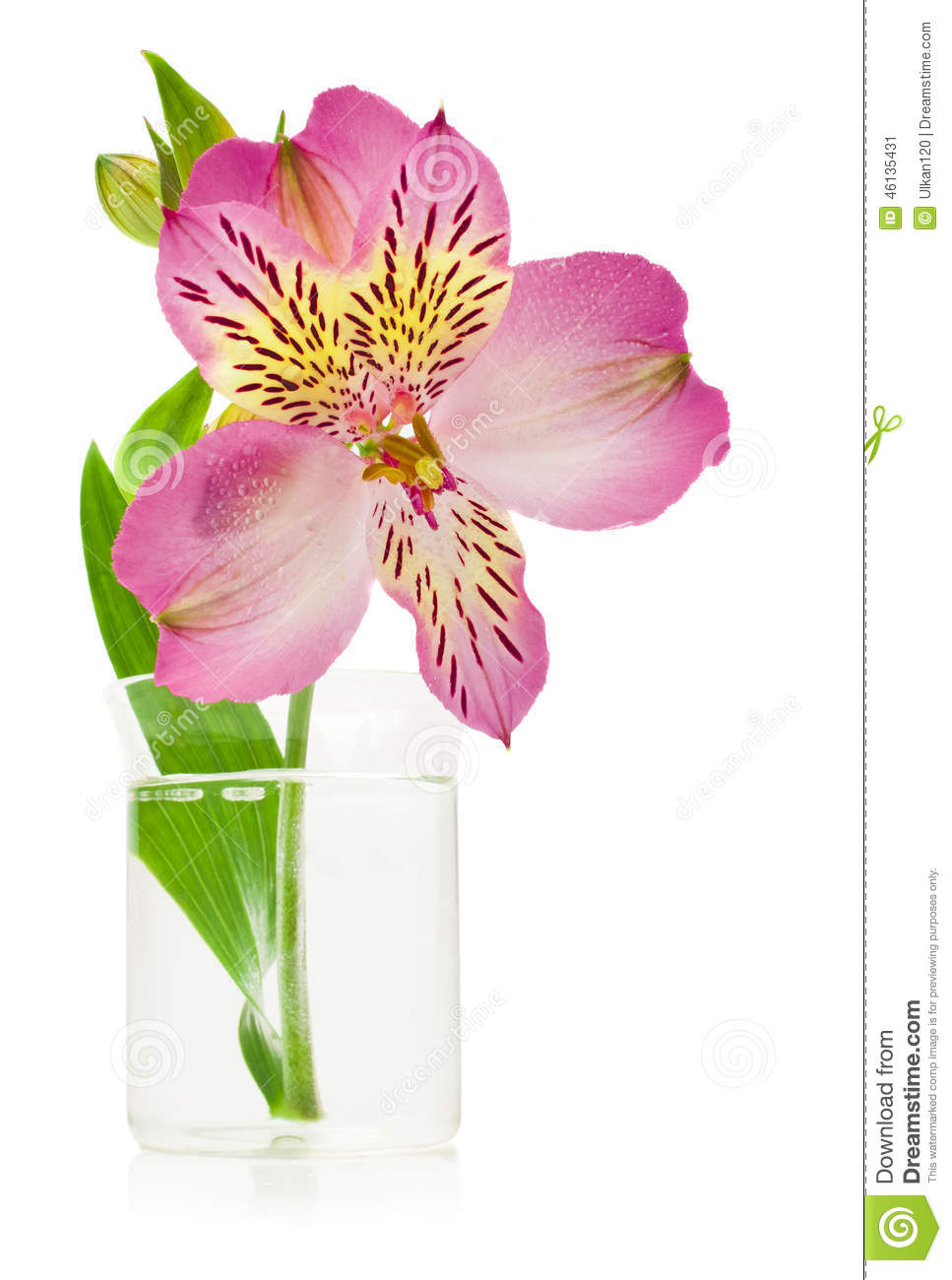 Pink lily flower transparent image the cliparts - Background Flower Lily Pink