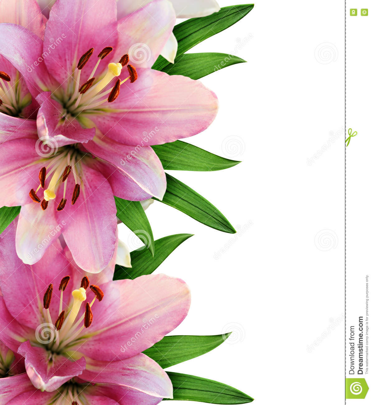 Pink Lily Flowers Border Stock Photo Image Of Round 77622172