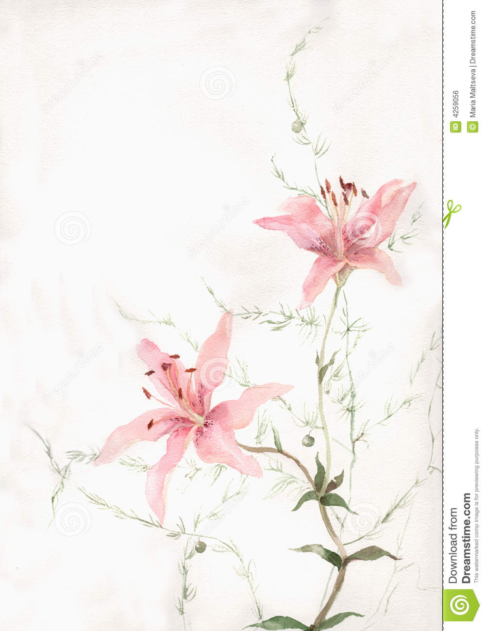 Pink lily flowers watercolor painting