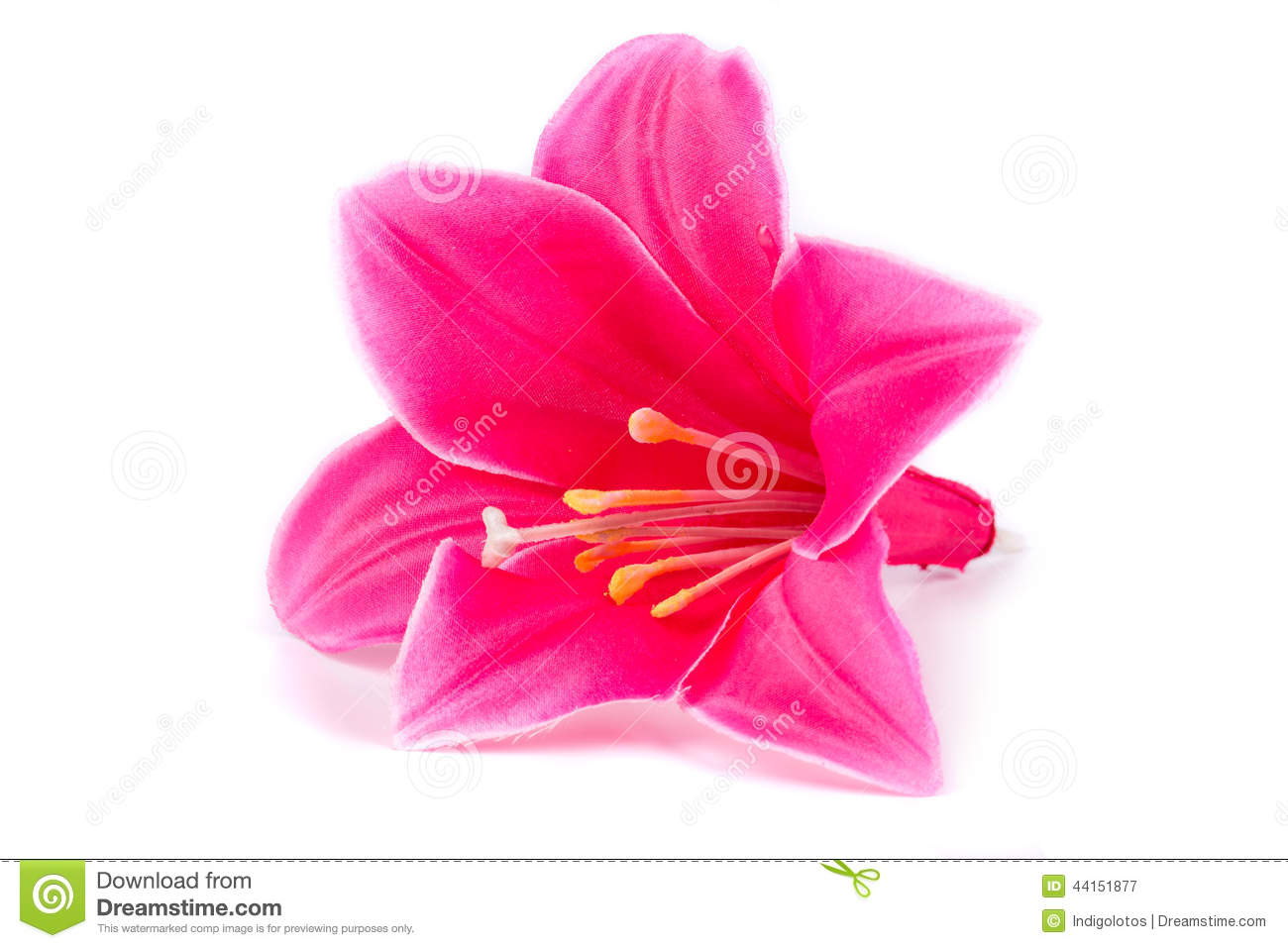 Pink Lily On White Background Royalty Free Stock Image