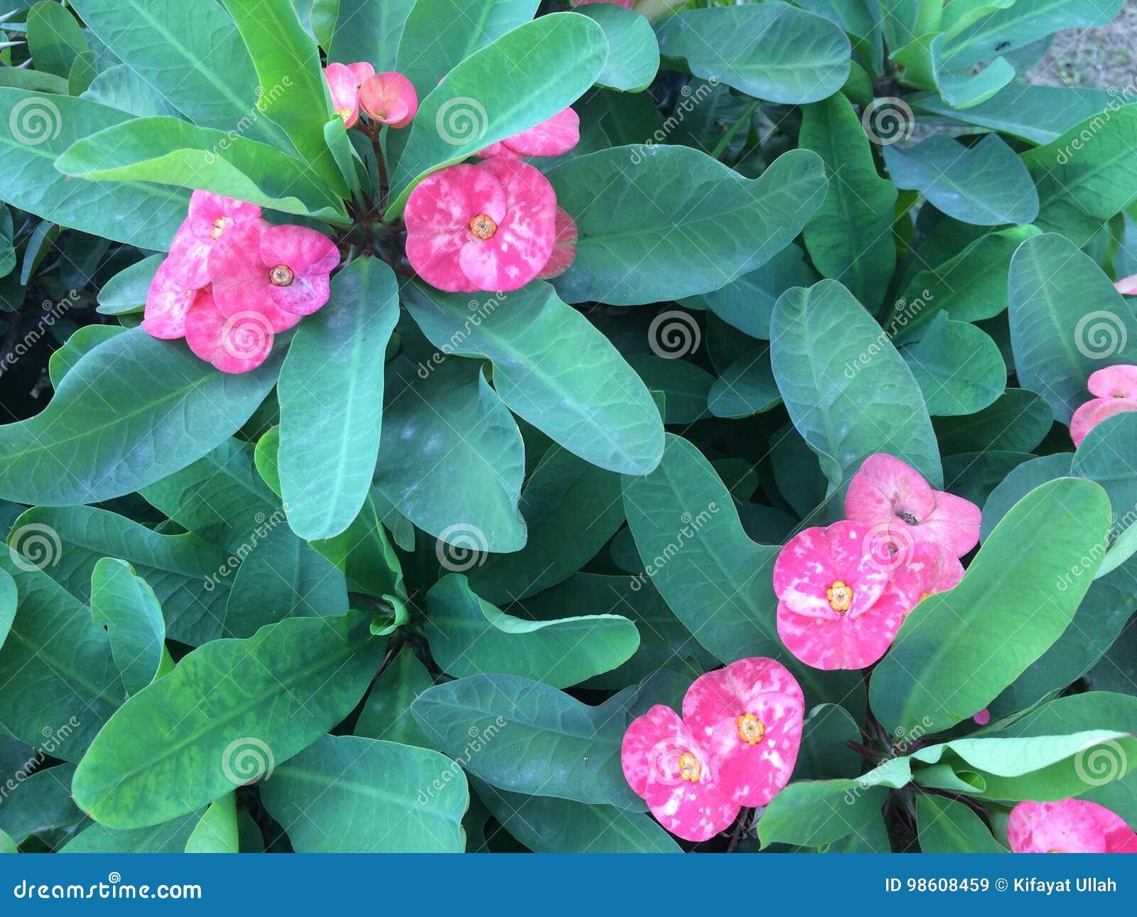 Pink little flower with long green leaves stock image image of download pink little flower with long green leaves stock image image of nice pink mightylinksfo