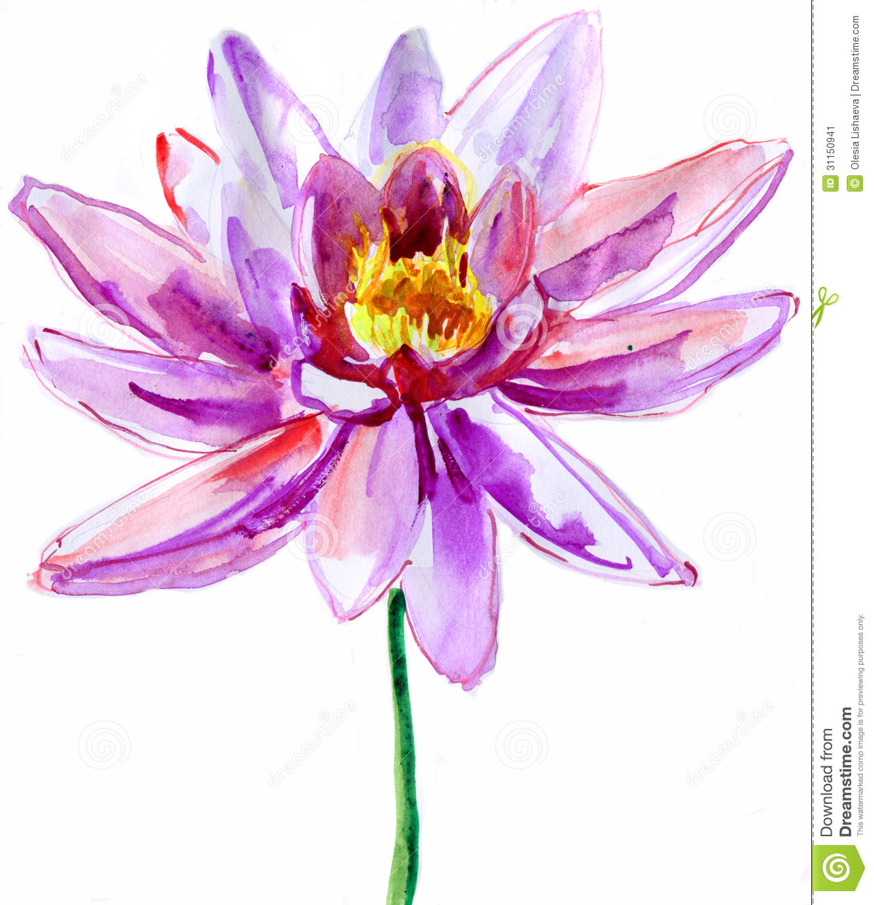 Beautiful LotusSingle Lotus Flower Isolated On White Background Watercolor