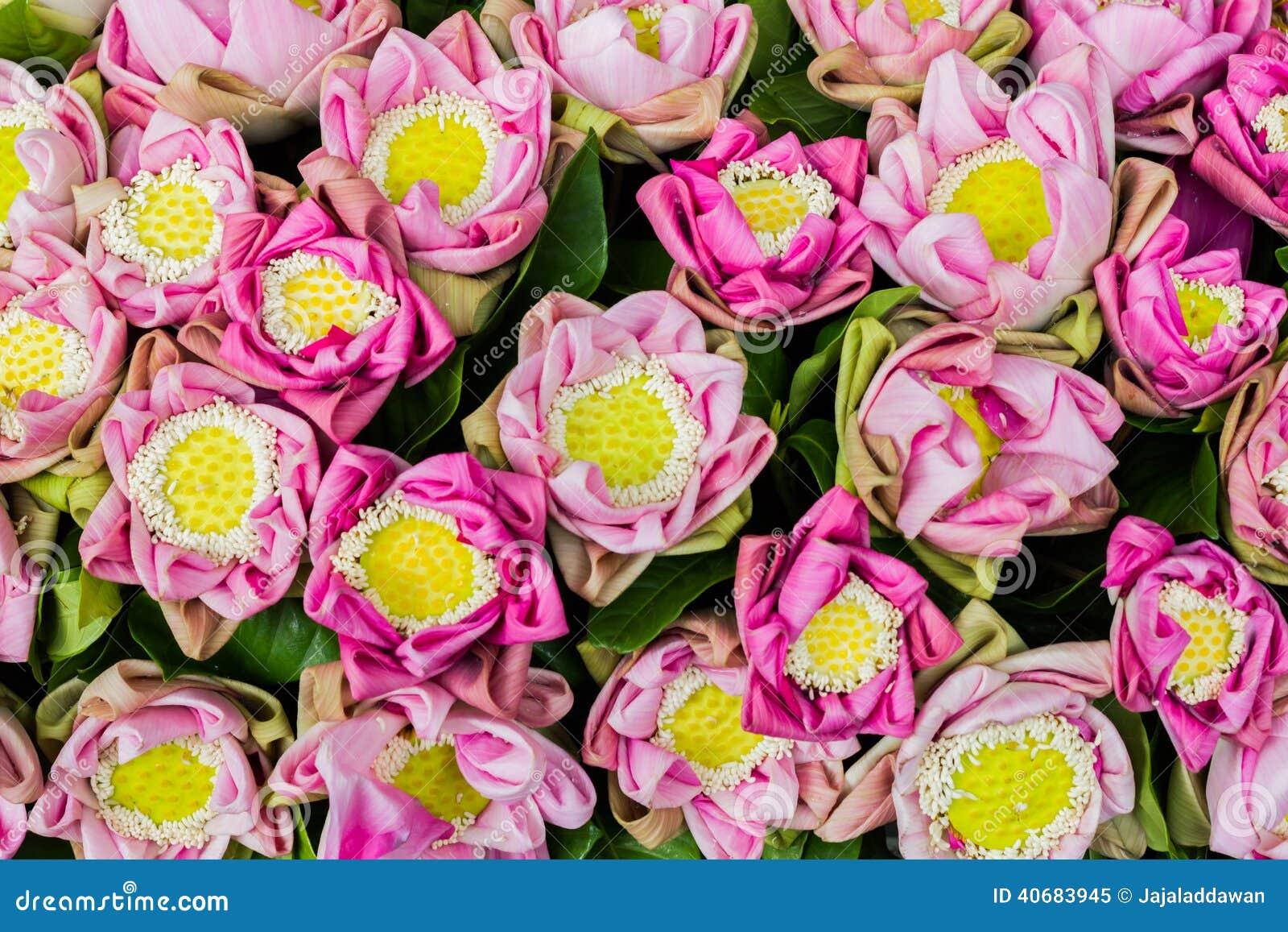 Pink Lotus Flower Arrangement Background Stock Image Image Of