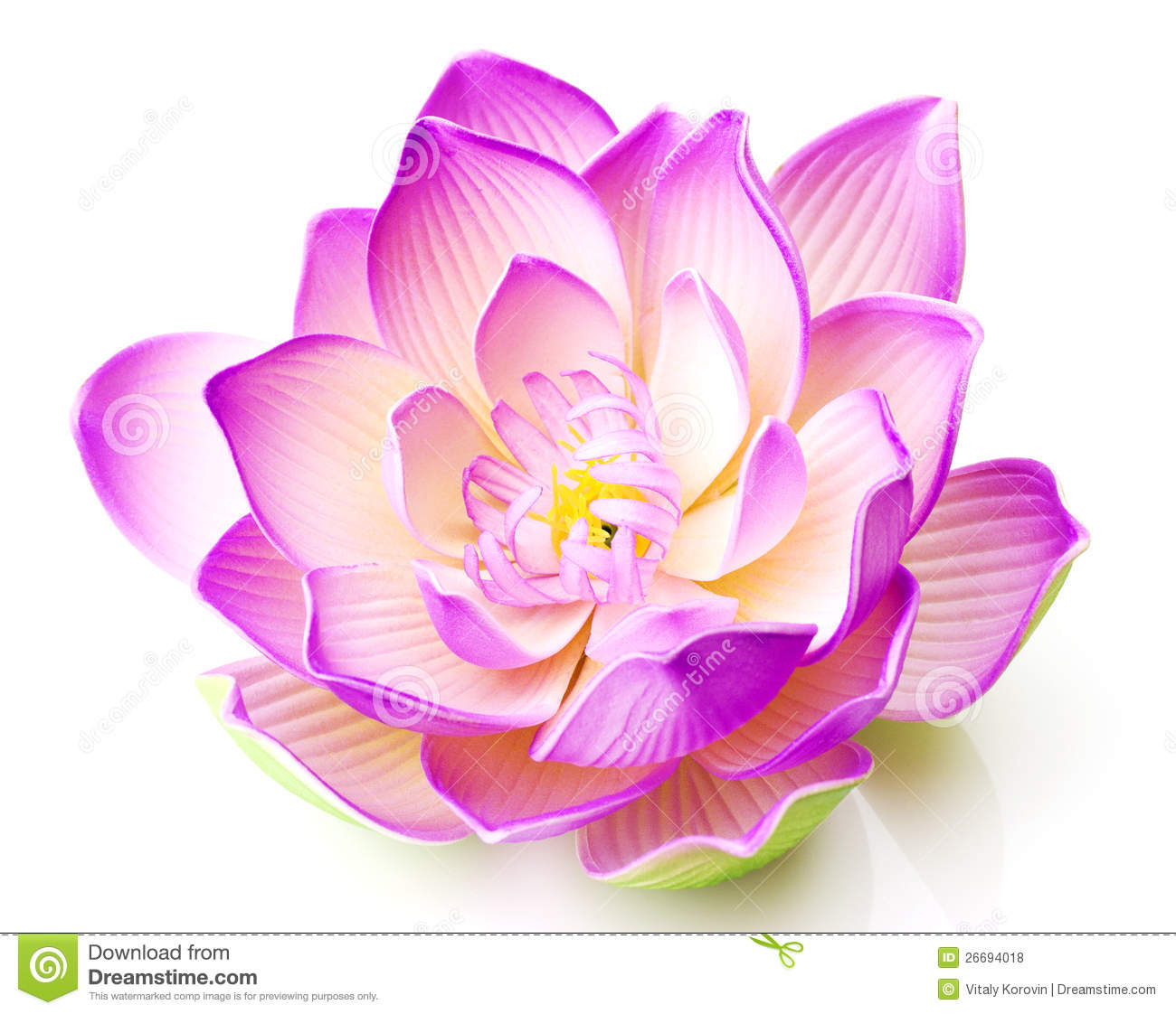pink lotus flower royalty free stock photography  image, Beautiful flower