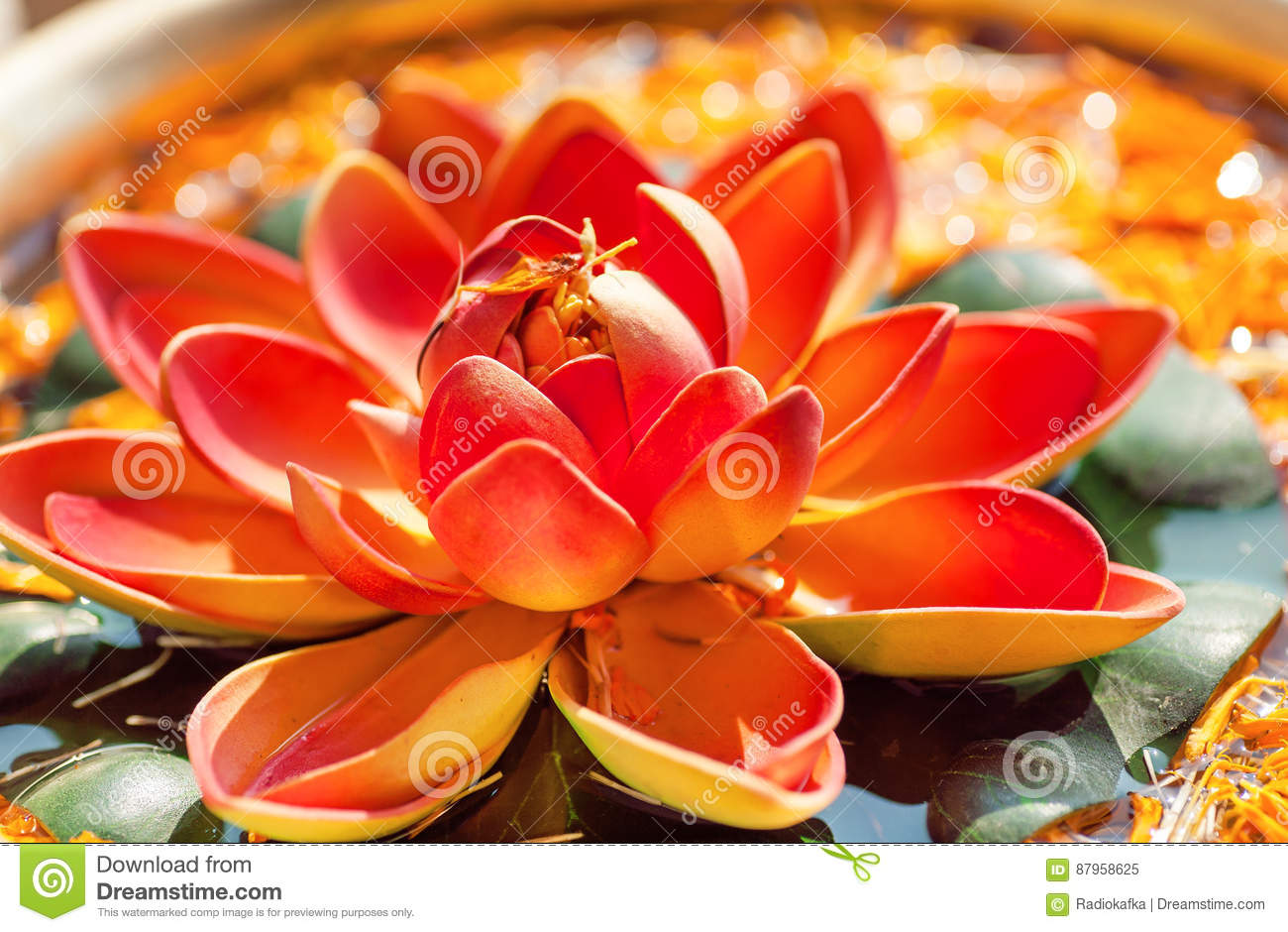 Pink Lotus Flower In Bowl With Fresh Water Sacred Plant In Hinduism