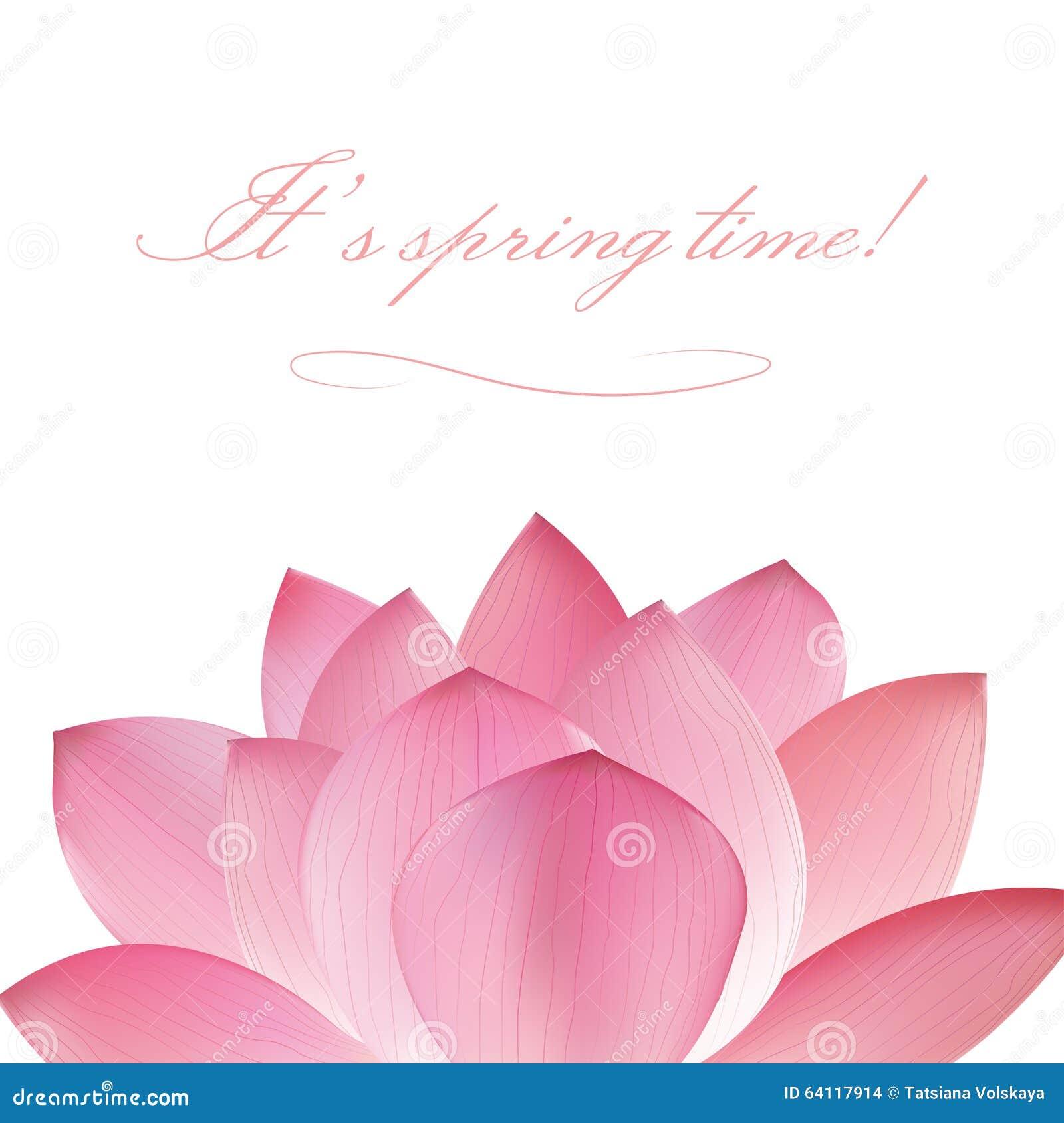 Pink Lotus Flower On White Background Stock Vector Illustration